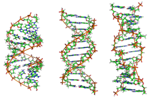 a-dna_b-dna_and_z-dna